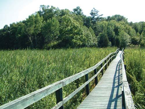 A wooden bridge through a sea of green