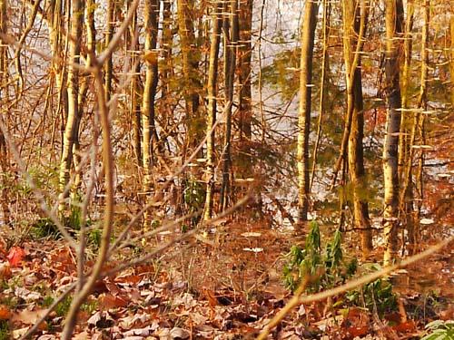Autumn foliage is found throughout Haldimand County