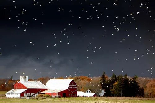A flock of birds stand in stark contrast to the foreboding stormy sky