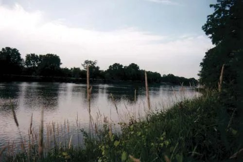 a lake at dusk surrounded by long green grass and cat tails