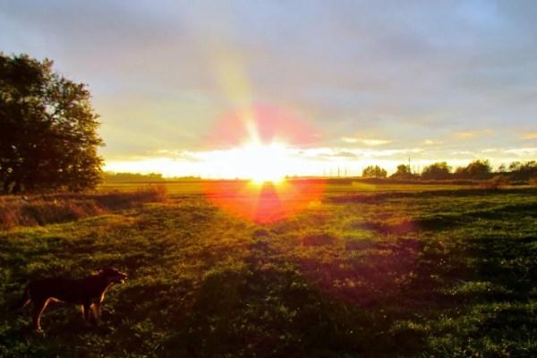 A sun sets along the field