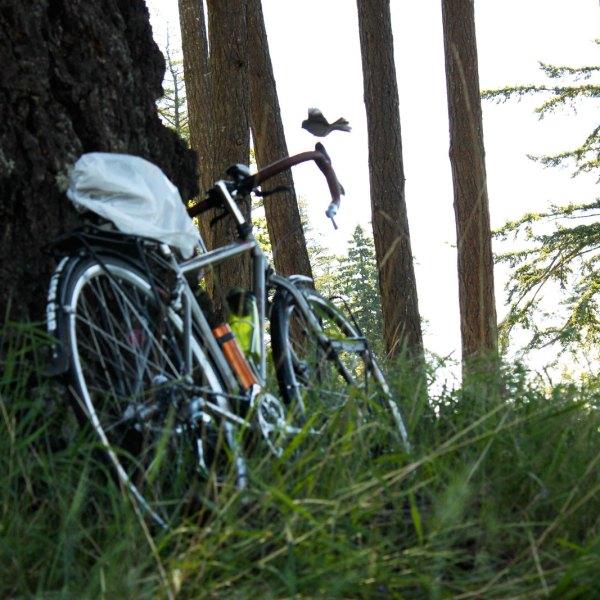 Birds on Bikes