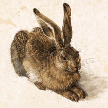 Young_Hare__Durer