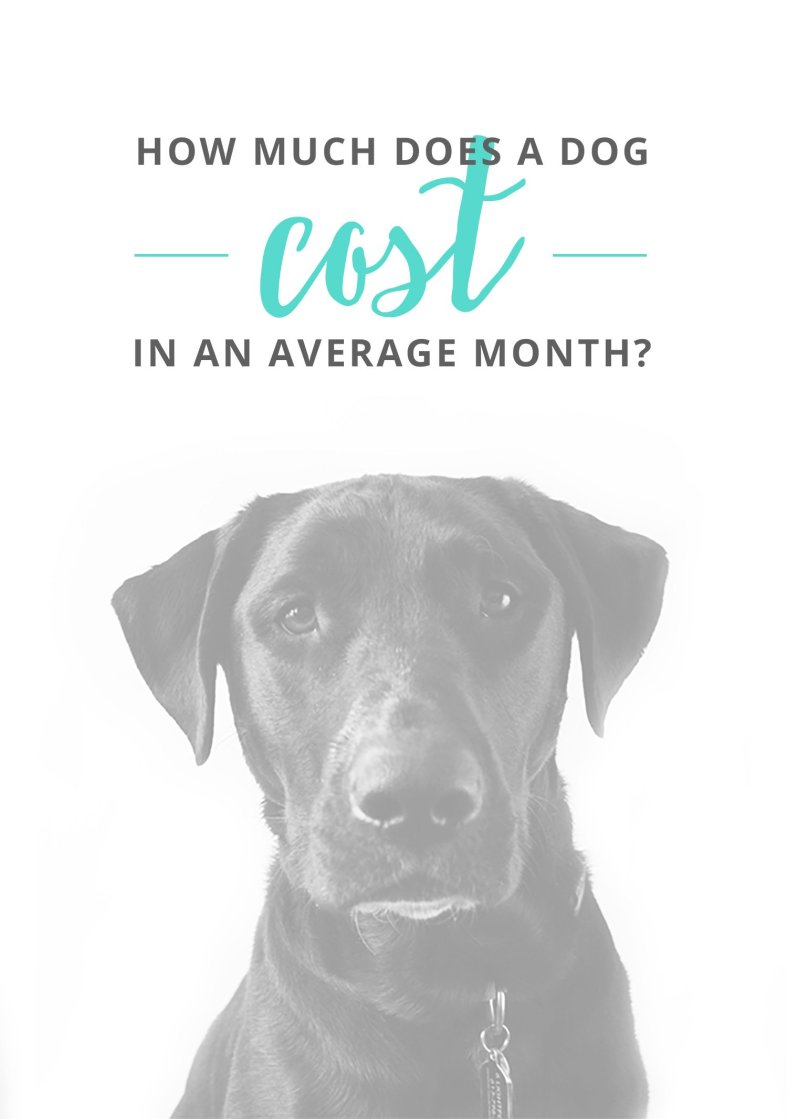 how-much-dog-cost-per-month