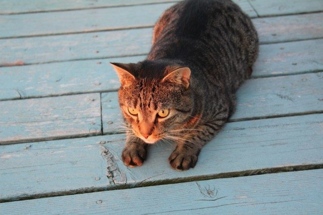 Jonesy on Deck