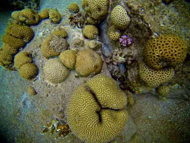 Red-Sea-Diving-Coral