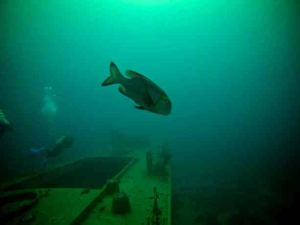 Red-Sea-Diving-Lone-Fish