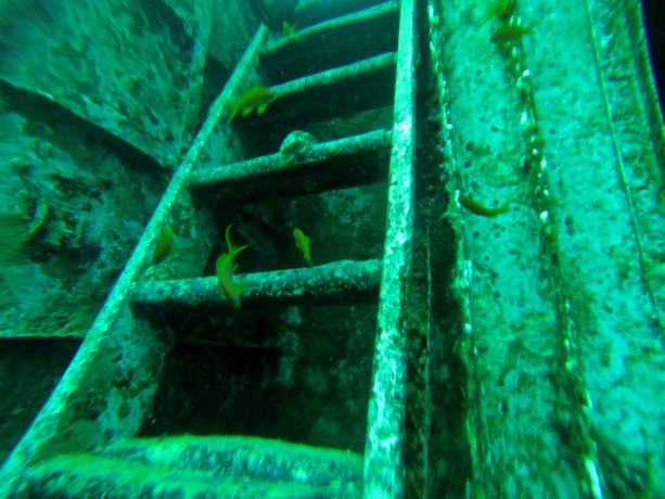 Red Sea Diving Ship Ladder