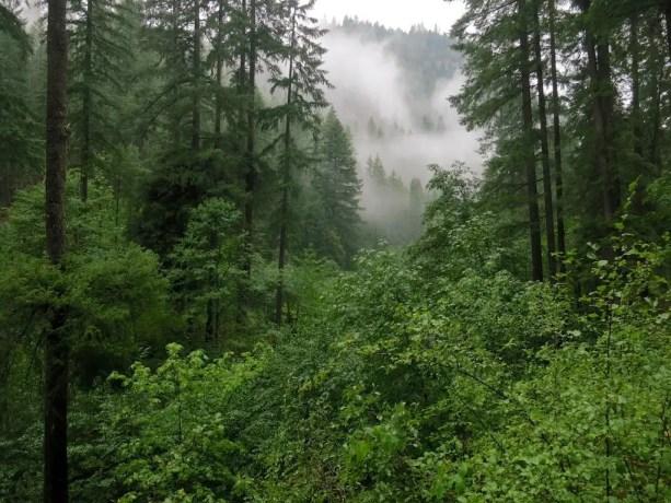 11 Fog Settles In Trail