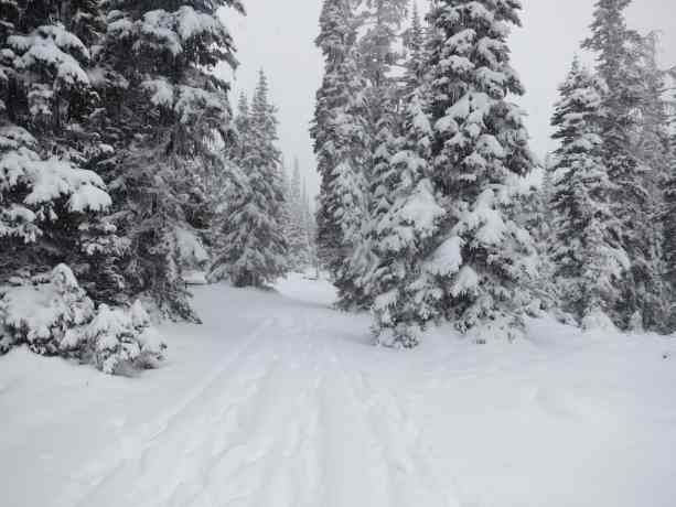 15 Harts Pass Snow