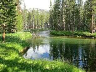 24 Lush Sierra Stream