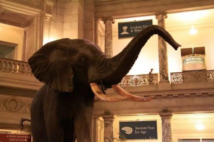 Washington DC Smithsonian Elephant