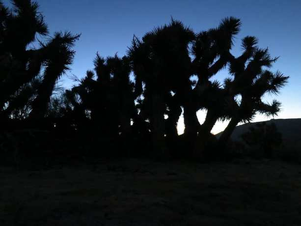 PCT Sunset Joshua Tree