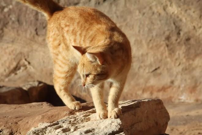Jordan Cat 1