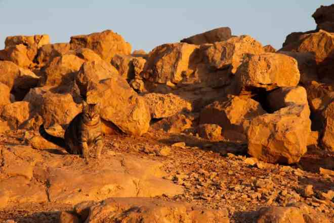 Masada Israel Cat 2