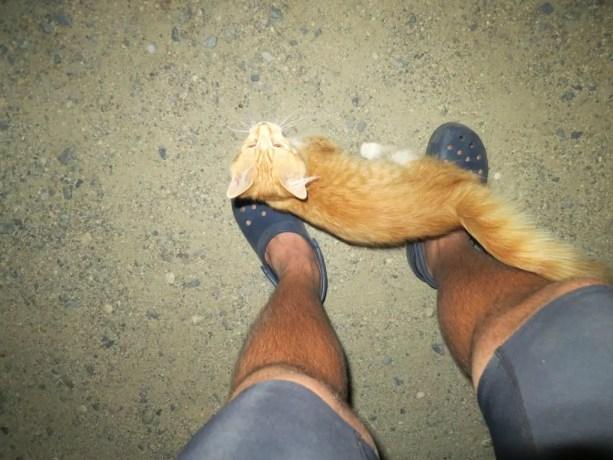 PCT Lake Isabella Kitten Cat