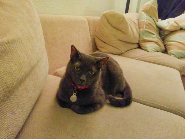 Sweden Cat 1