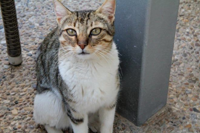 The Negev Cat 1