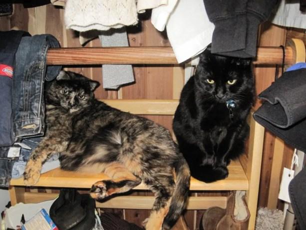 Thousand Oaks Cat 2