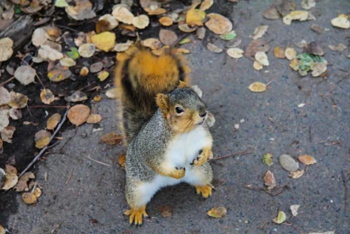 USA-California-Squirrel