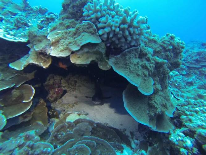 USA-Maui-Shark