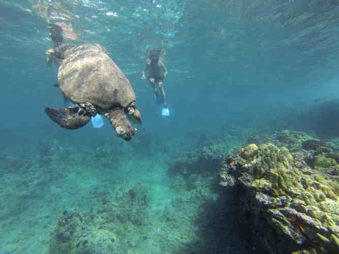 USA-Maui-Turtle