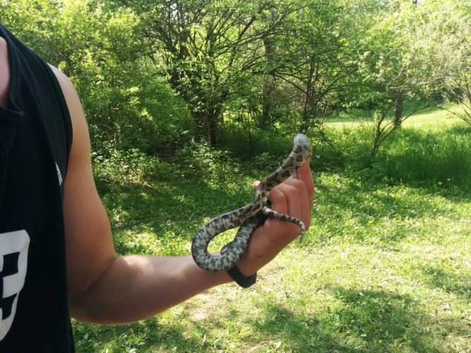 USA-Michigan-Snake