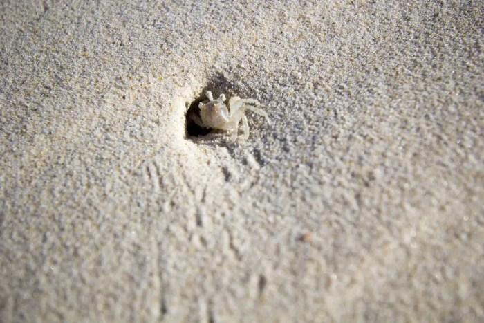 Australia-Ballina-Crab