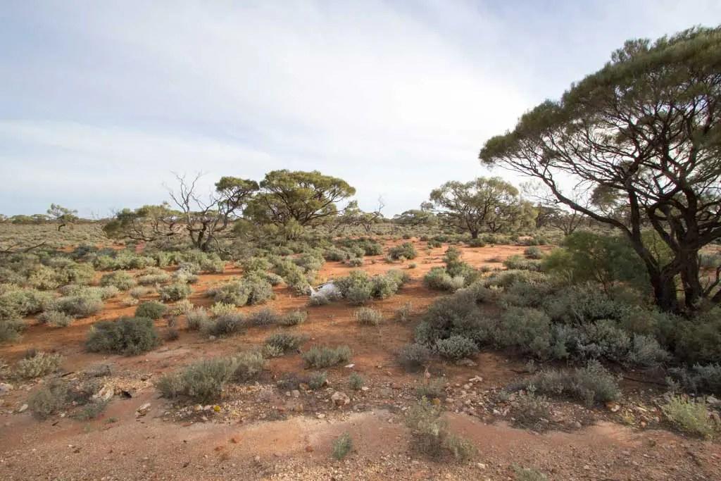 Australia-Outback-View