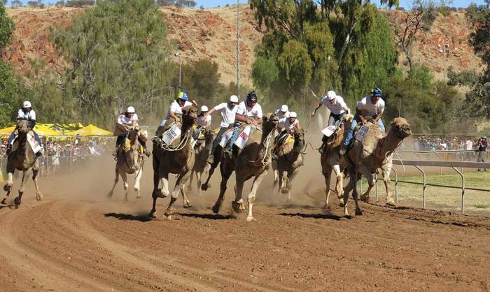 alice-springs-camel-race
