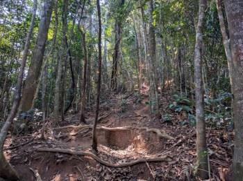 brazil-rio-de-janeiro-corcovado-trail-5