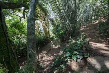 pedra-bonita-trail-2