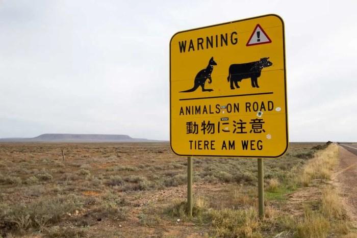 australia-outback-kangaroo-sign-1