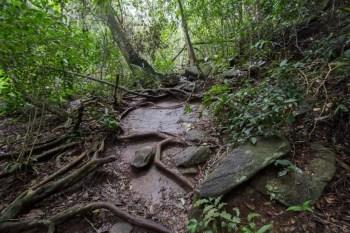 brazil-rio-de-janeiro-cachoeira-dos-primatas-trail-5