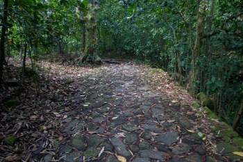 brazil-rio-de-janeiro-pedra-da-gavea-trail-12