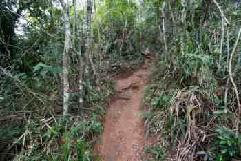 brazil-rio-de-janeiro-pedra-da-gavea-trail-5