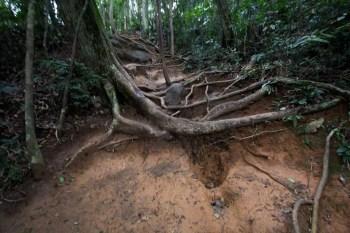 brazil-rio-de-janeiro-pedra-da-gavea-trail-8