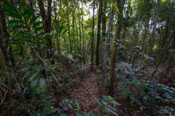 pedra-bonita-alternate-trail-2