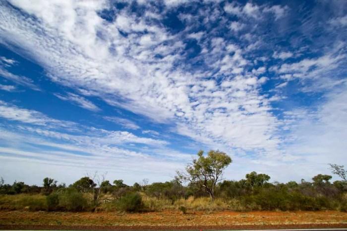 Australia-Bike-Tour-Outback-Trees