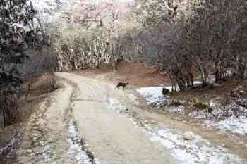 Nepal-Tengboche-Animal-Crossing