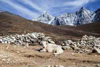 Nepal-Three-Passes-Trek-Day-12-6-Yak