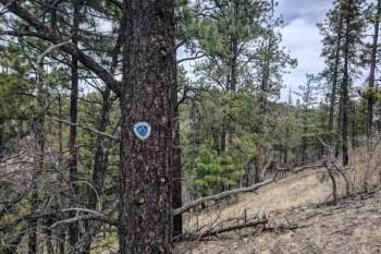 CDT-New-Mexico-CDT-Tree-Marker