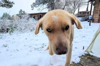 CDT-New-Mexico-Pie-Town-Stubing-Snow-Tent