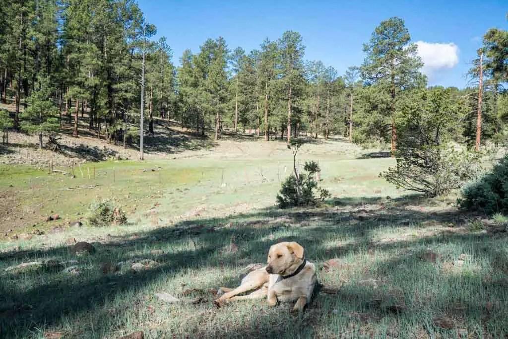 CDT-New-Mexico-Stubing-Dog-Grass
