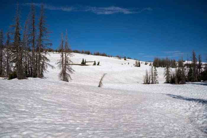 CDT-Colorado-Snow-Trees-Blue-Sky