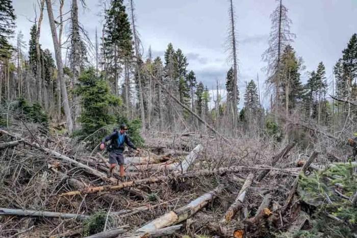 CDT-New-Meixco-Moist-Trail-Blowdowns