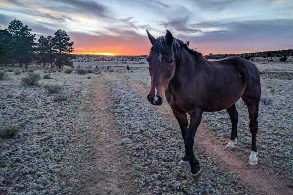 CDT-New-Mexico-Photo-Gallery-Horse-Sunset
