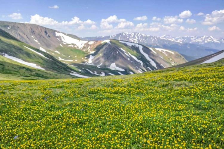 CDT Colorado Ridge Flowers