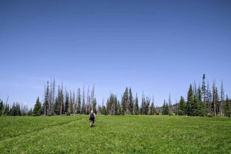 CDT Colorado Appa Grass
