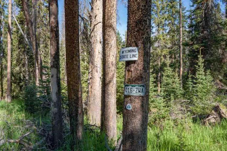CDT Colorado Wyoming Border Tree